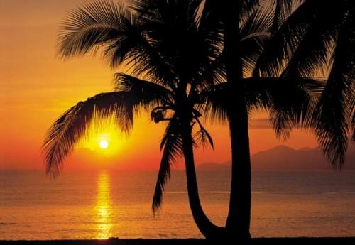 Komar Fototapete Palmy Beach Sunrise 368 x 254 cm #8-255 Bild 1