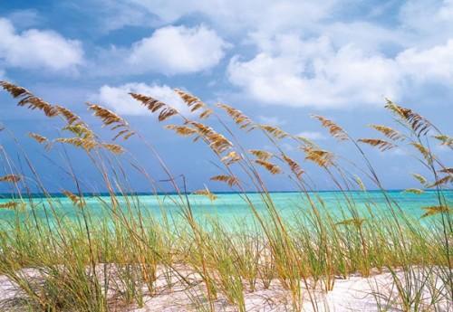Komar Fototapete Ocean Breeze 368 x 254 cm #8-515 Bild 1