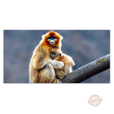 Affen – Bild 1
