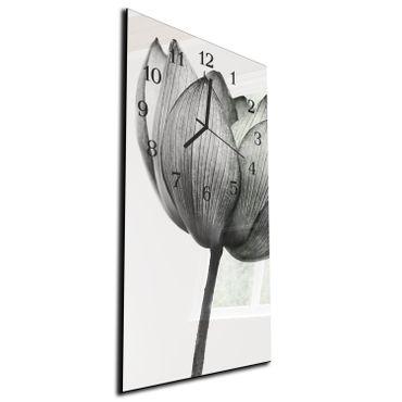 Tulpe Grau – Bild 2