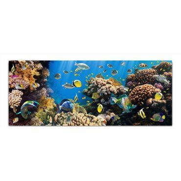 Korallenriff – Bild 2
