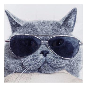 Britische Katze – Bild 5