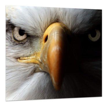 Adler-Porträt – Bild 3