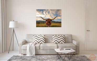 Texas Longhorn – Bild 5