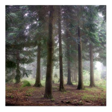 Foggy Forest – Bild 2