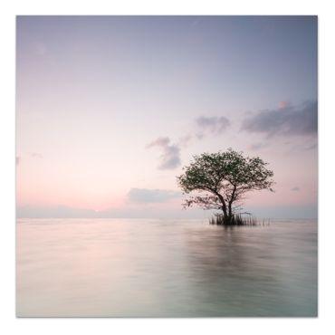 Allein Baum – Bild 2