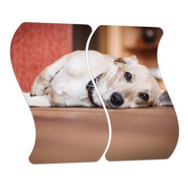 Cross-Breed-Hund – Bild 4