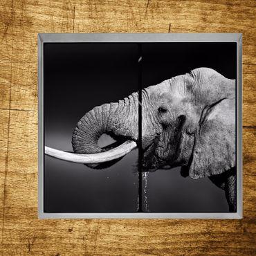 Elefantporträt – Bild 3