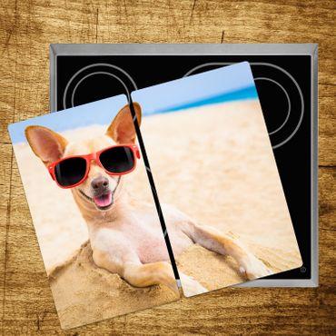 Chihuahua – Bild 5
