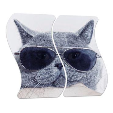Britische Katze – Bild 4