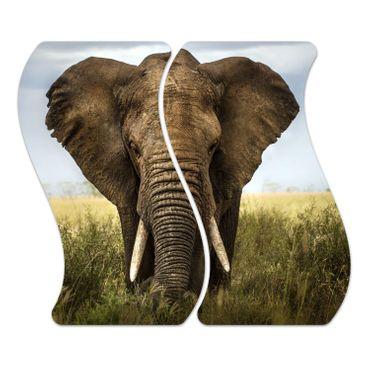 Elefant – Bild 1