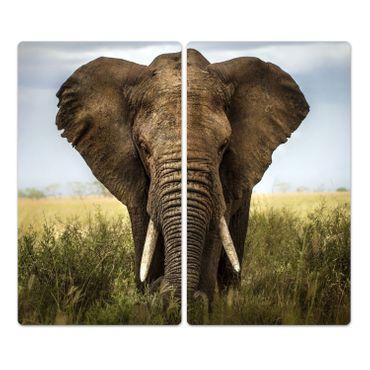 Elefant – Bild 2