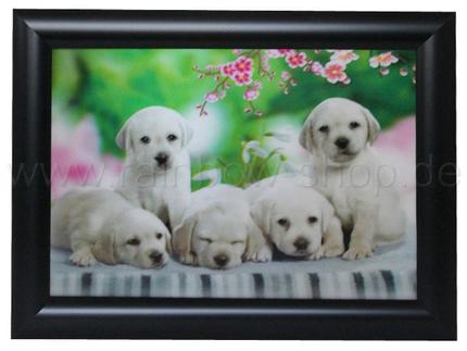 3DB-120 3D Bild Hunde Welpen ca. 25 x 35 cm