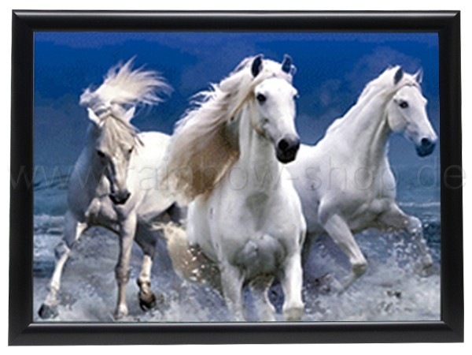 3DB-305 3D Bild Weiße Pferde ca. 40 x 60 cm