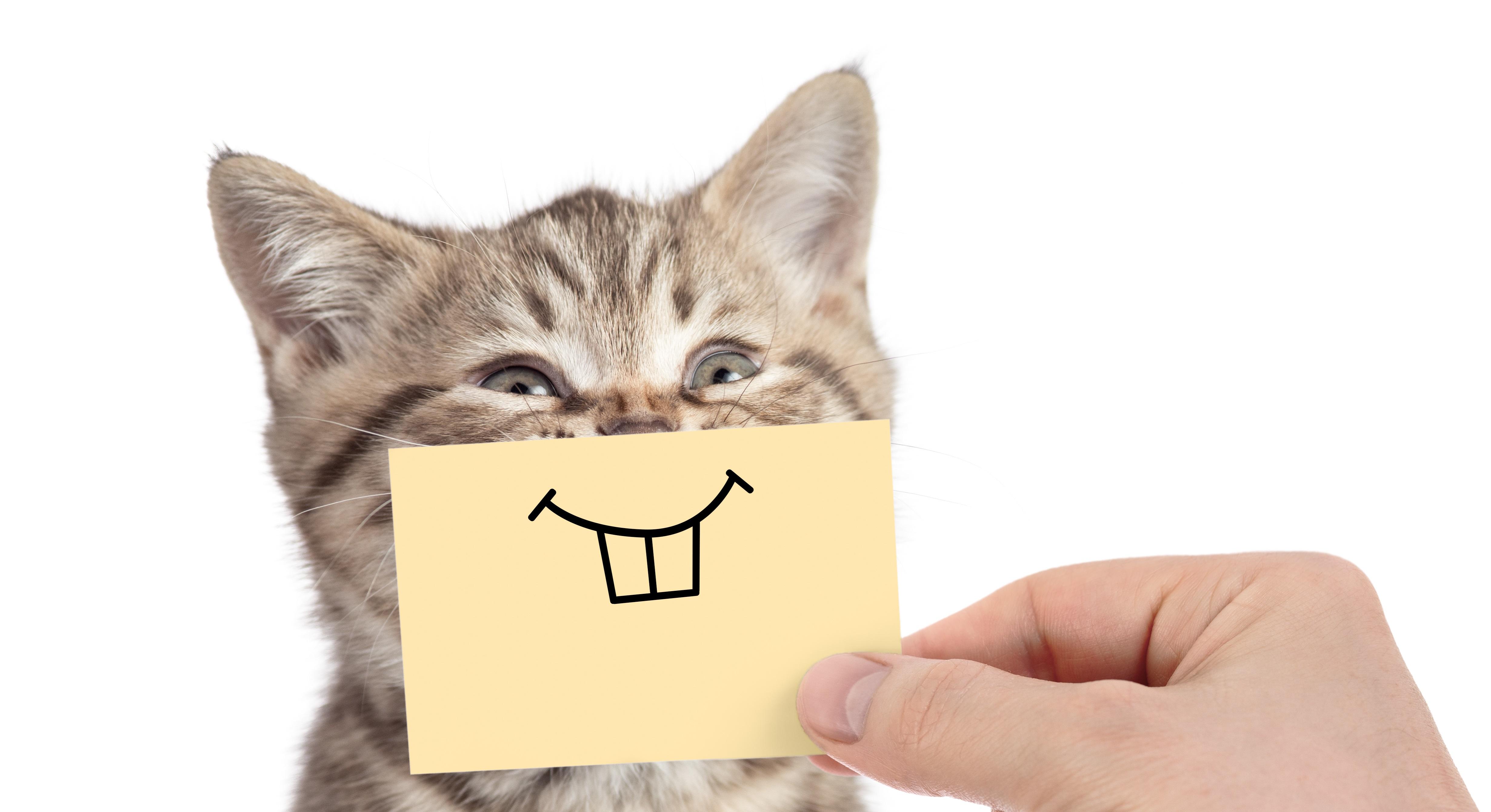 Alles für die Katze