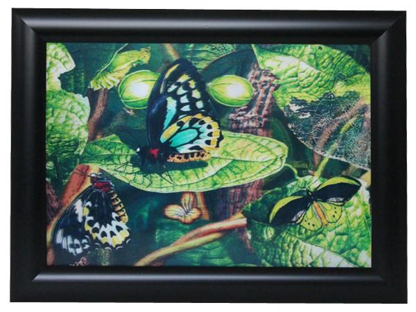 3D Effekt Bilder Wandbild Effektbild Bild Wandbilder mit Rahmen Schmetterling 107