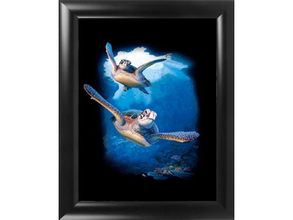3D Effekt Bilder Wandbild Effektbild Bild Wandbilder mit Rahmen Schildkröte 220