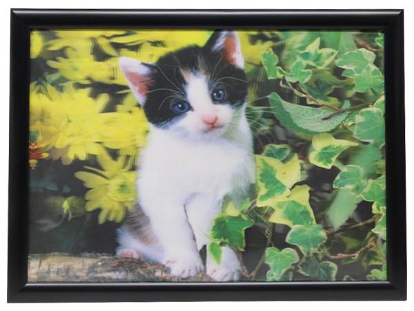 3D Effekt Bilder Wandbild Effektbild Bild Wandbilder mit Rahmen Katze 402