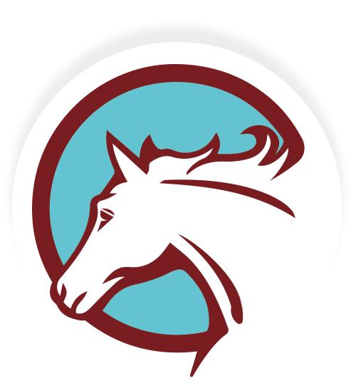 Natural Horsemanship & Bodenarbeit von Profis lernen!