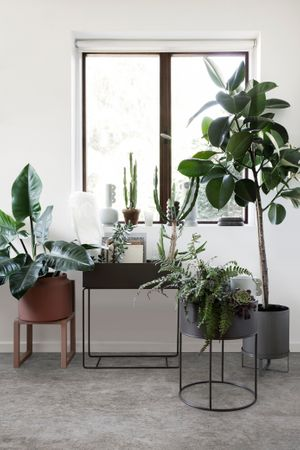 Plant Box Pflanzenbehälter schwarz black – Bild 1