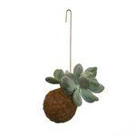 Planteplanet M hängende Pflanze 001