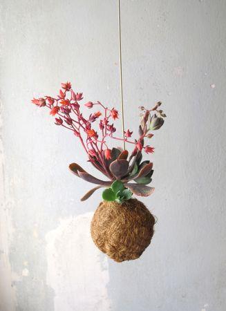 Planteplanet L hängende Pflanze – Bild 1