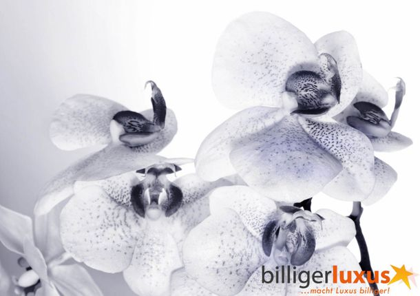 Wall mural wallpaper orchidee flower blossom white photo 360 cm x 254 cm / 3.94 yd x 2.78 yd online kaufen