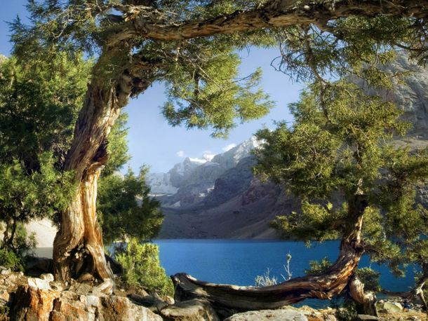 Wall mural wallpaper trees mountain lake poster 127 cm x 180 cm/1.39 yd x 1.97yd online kaufen