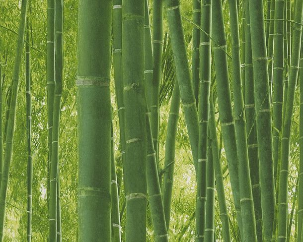 Wallpaper bamboo forest floral nature green 9387-18