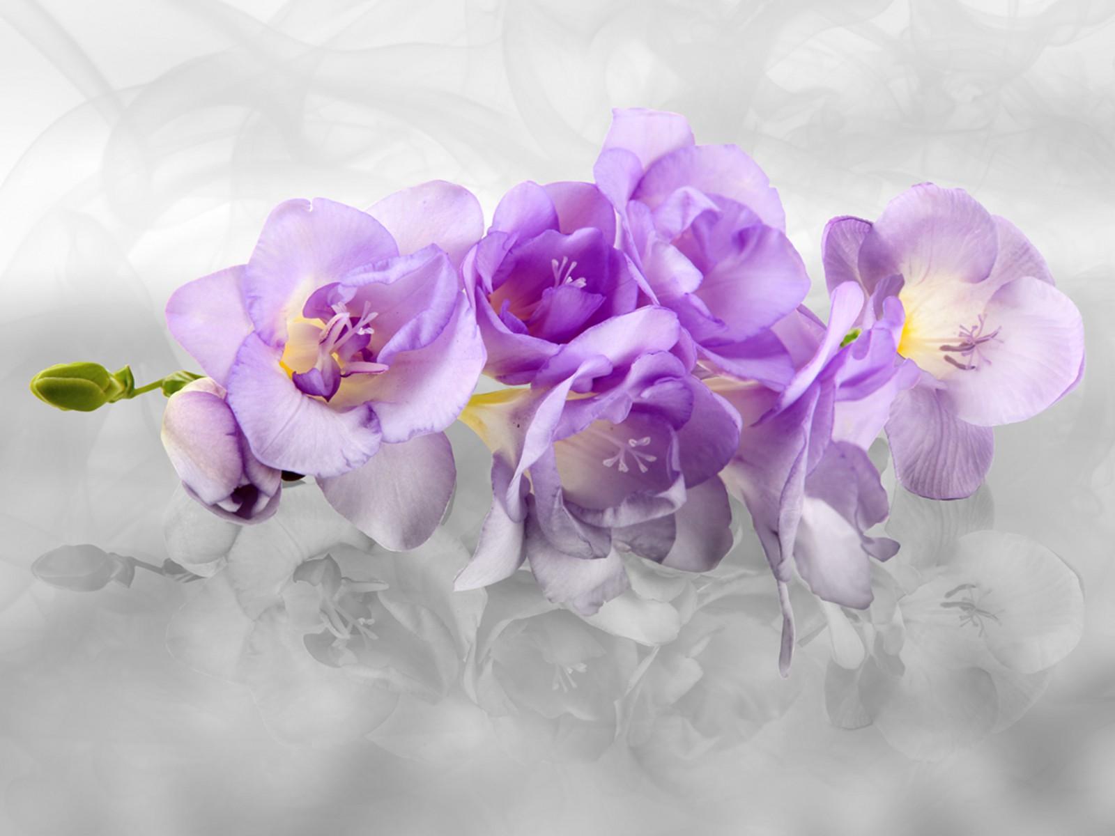 xxl fototapeten tapete orchideen blumen bl te 3d. Black Bedroom Furniture Sets. Home Design Ideas