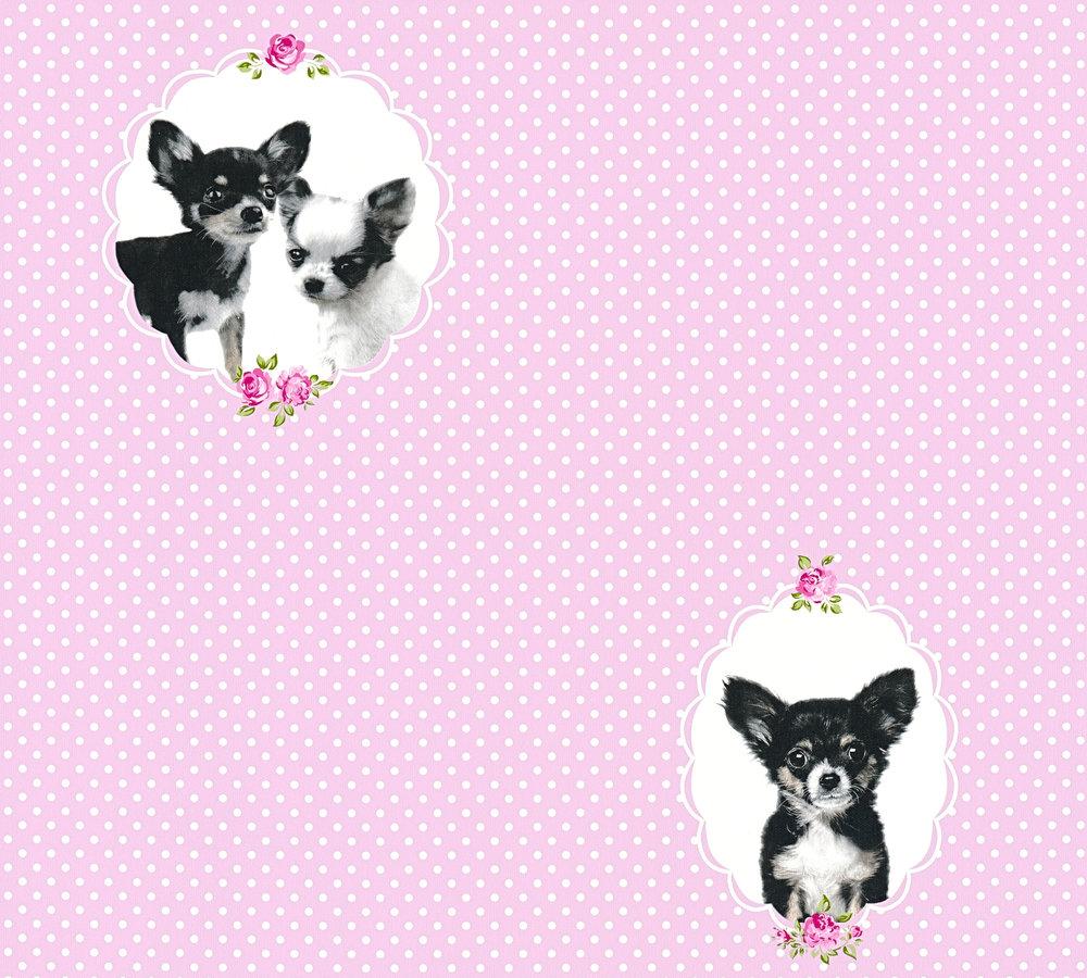 kindertapete chihuahua hund rosa wei 35851 1. Black Bedroom Furniture Sets. Home Design Ideas