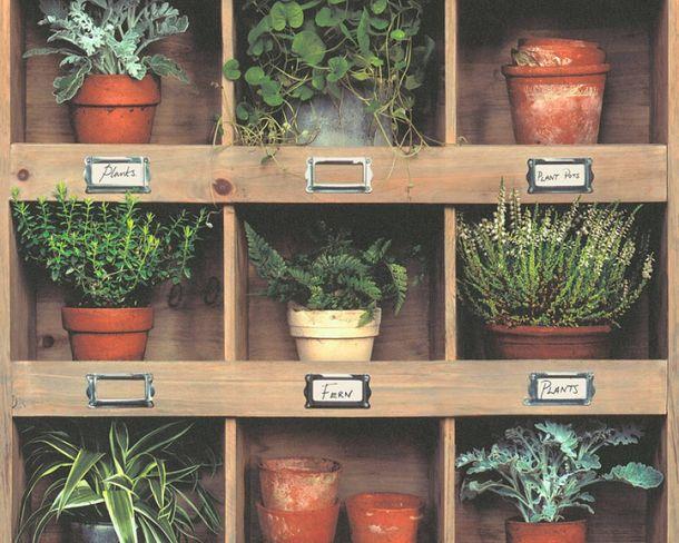 Vliestapete Holzregal Topfpflanze beige grün 36486-1 online kaufen