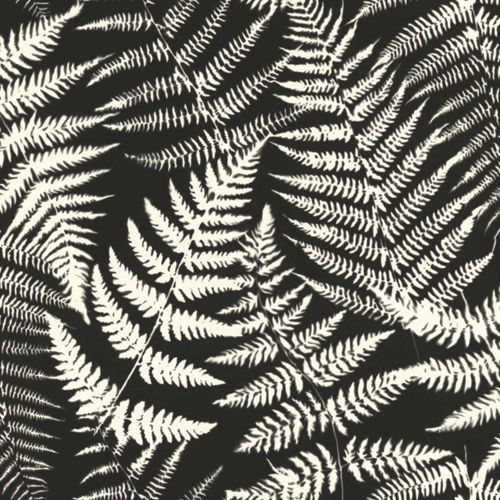 Non-Woven Wallpaper Leaves Negativ black white 139001 online kaufen