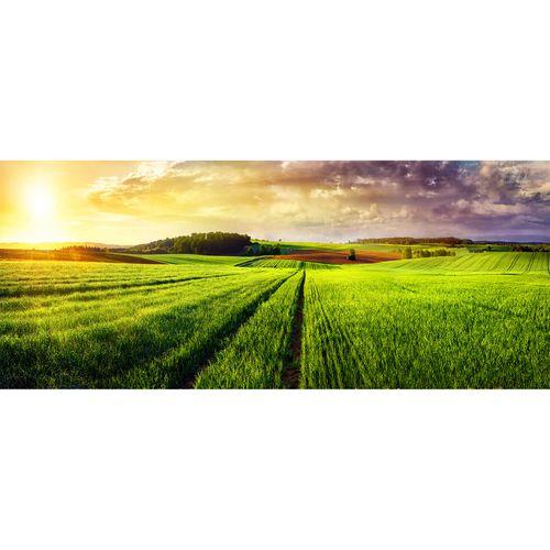 Photo Non-Woven Wallpaper Field Meadow yellow green