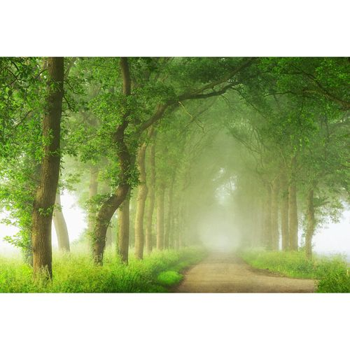 Photo Wallpaper Forest Path Mist brown green DD109265
