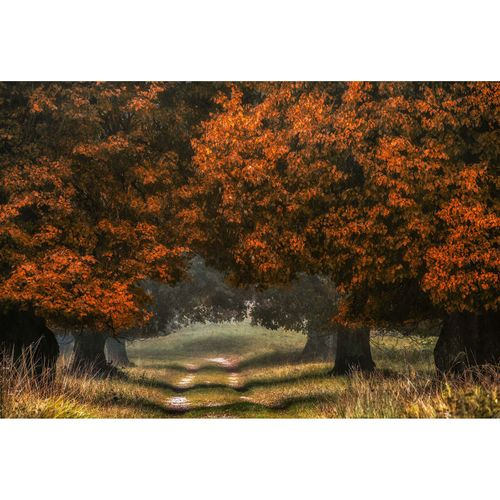 Photo Wallpaper Forest Path Autumn brown DD109270