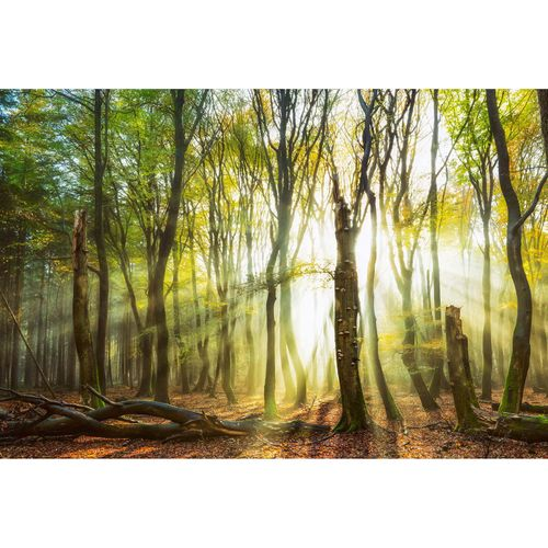 Photo Wallpaper Forest Glade brown yellow DD109300