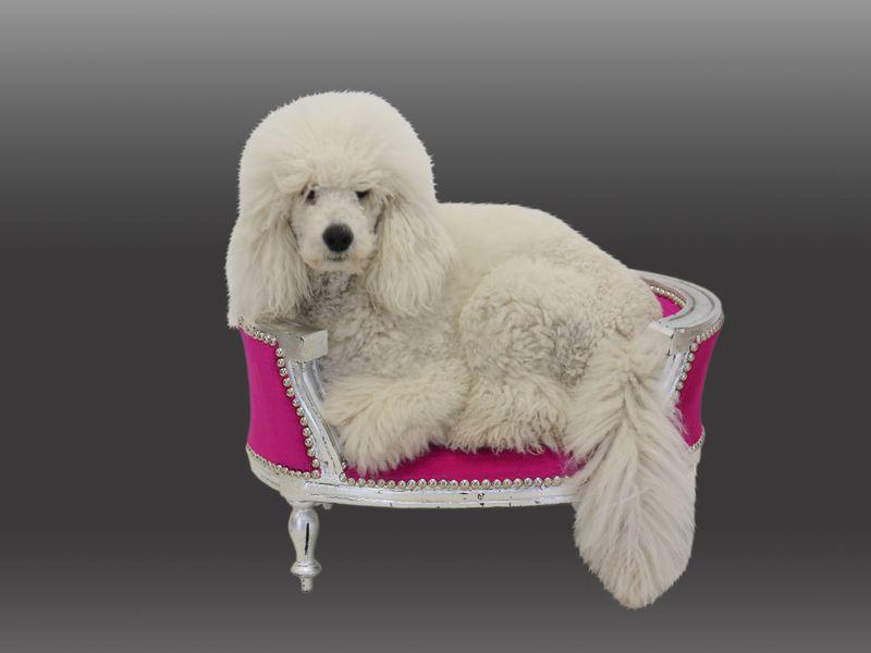 Hundesofa Hundebett Hundekorb im Barock Stil silber/pink (8436) – Bild 4