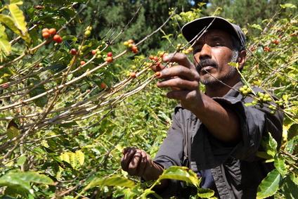 Kaffeeverarbeitung in Äthiopien