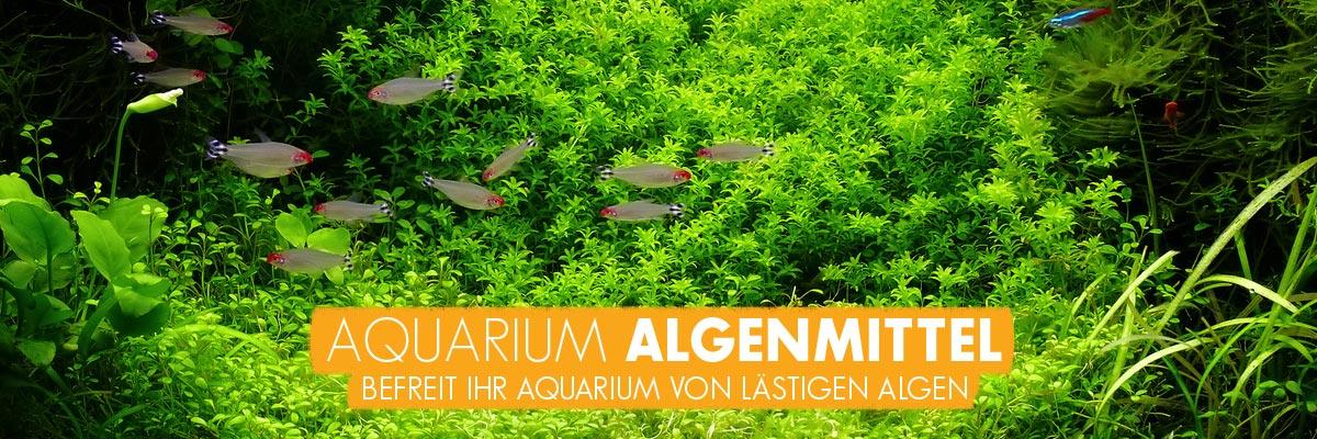 aquabasics Aquarium Algenmittel