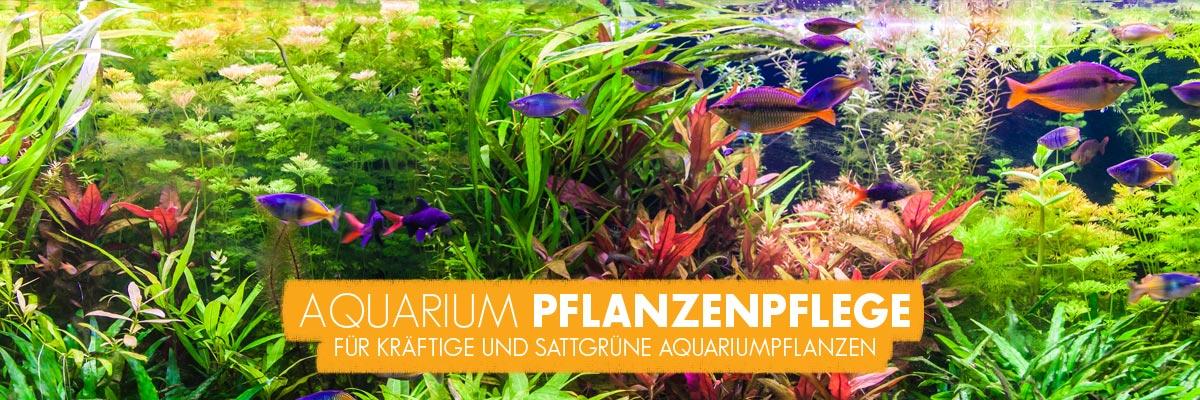 aquabasics Pflanzenpflege für Ihr Aquarium