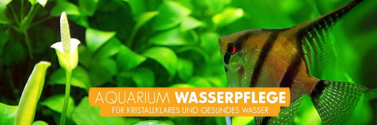 aquabasics Wasserpflege für Ihr Aquarium