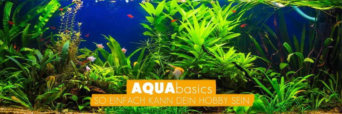 Darum AQUAbasics für Ihr Aquarium und Gartenteich