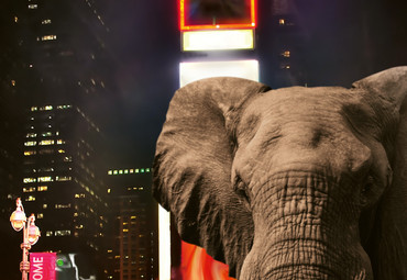 Wall Mural Elephant In New York Paper 368x254cm – Bild 3