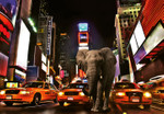Papier Fototapete Elefant in New York 368x254cm 001