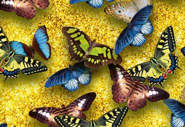 Papier Fototapete Schmetterlinge 368x254cm – Bild 3