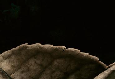 Vlies Fototapete 3D Blatt 368x254cm – Bild 3