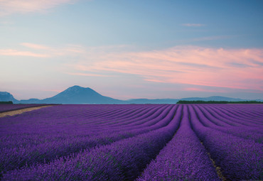 Vlies Fototapete Provence Frankreich 368x254cm