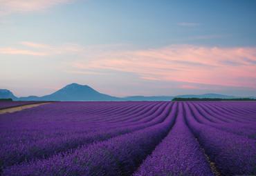 Vlies Fototapete Provence Frankreich 368x254cm – Bild 1