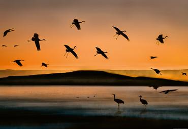 Vlies Fototapete Vögel bei Sonnenuntergang 368x254cm